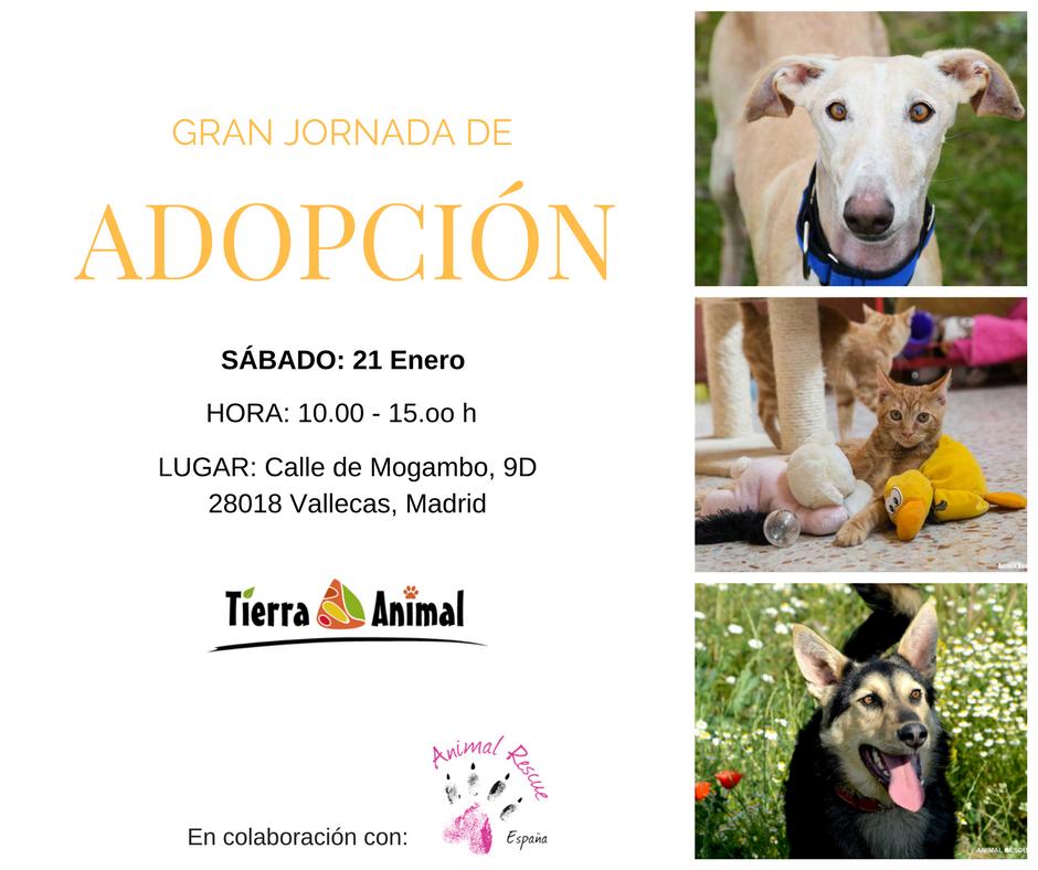 Gran Jornada de adopción de perros y gatos en Tierra Animal