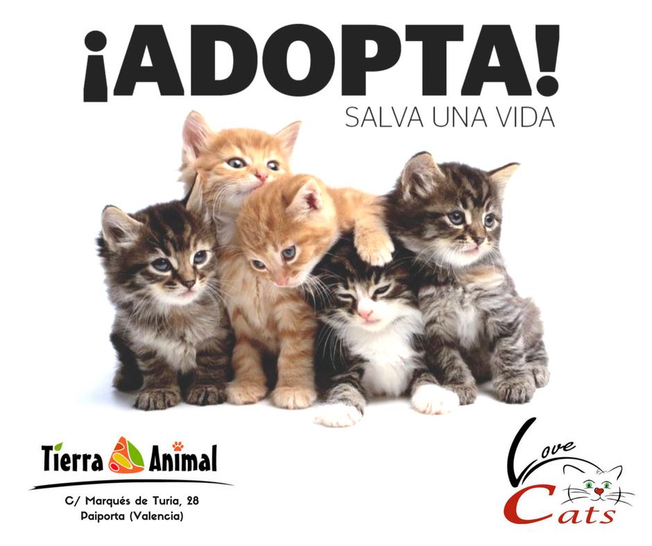 Jornada de adopción de gatos en Tierra Animal Paiporta